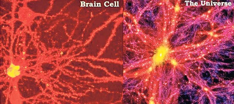 The universe as a brain